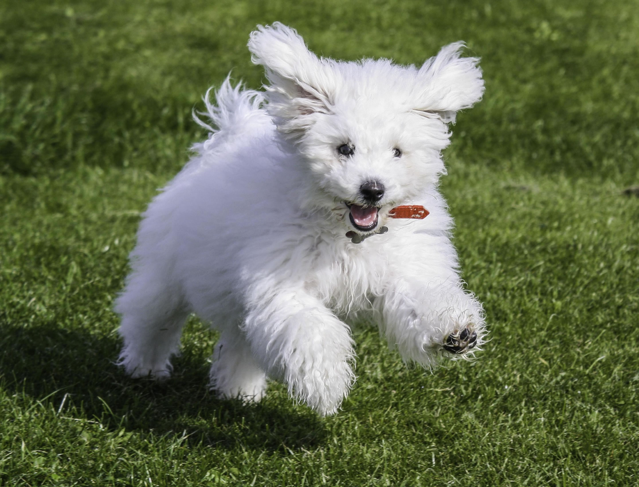 Blitz Dog Name