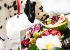 Can Dogs Eat Fruit? Here's a list of fruit your dog can enjoy