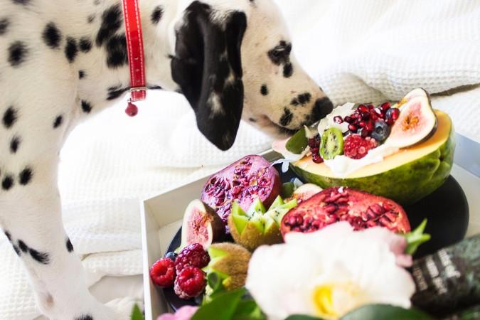 Dog eating fruit